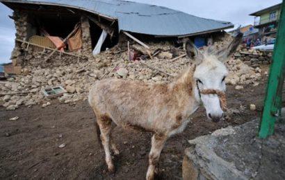 Keledai, Siklon Seroja dan Rekonstruksi Rumah Tahan Bencana