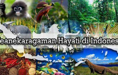 APA KEUNGGULAN INDONESIA DALAM EKONOMI GLOBAL