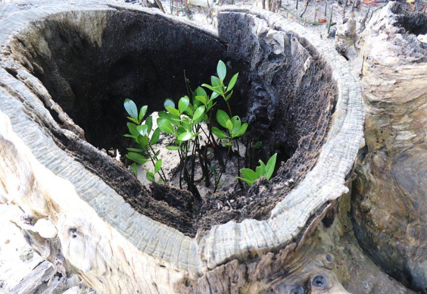 Bahan Bulan Lingkungan GMIT 2019